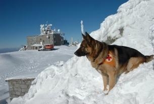 ПСС при БЧК организира квалификационен курс за спасителни кучета